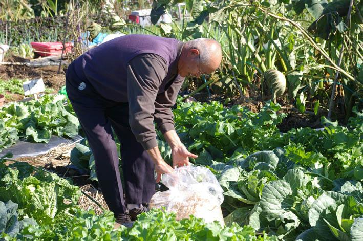 「大和市民ホームファーマー農園」を訪問(2006・11・9)_c0014967_19242020.jpg