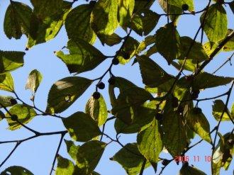 f0104277_19495793.jpg