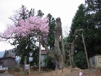 馬場桜には、どんな支援が似合うか_a0087378_19254064.jpg