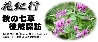 66号:秋の七草徒然探訪_e0100687_12513791.jpg