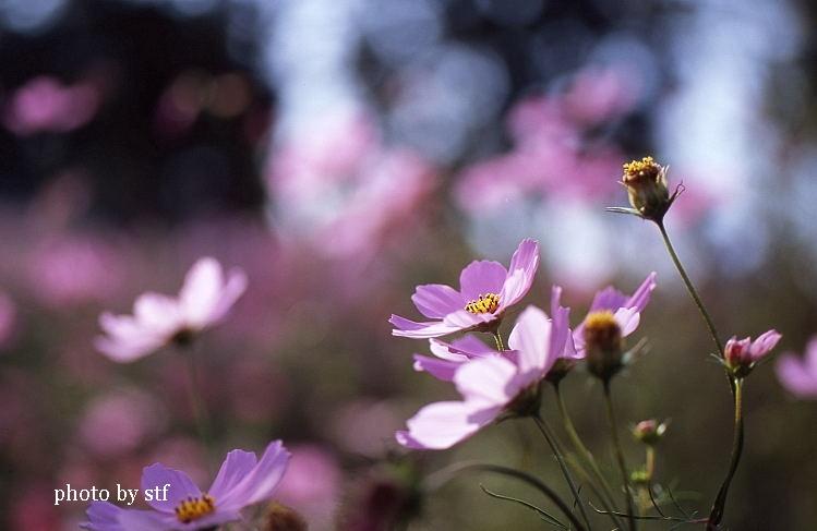 f0030527_1573128.jpg