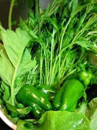 新鮮野菜の到着!_a0017350_22533264.jpg
