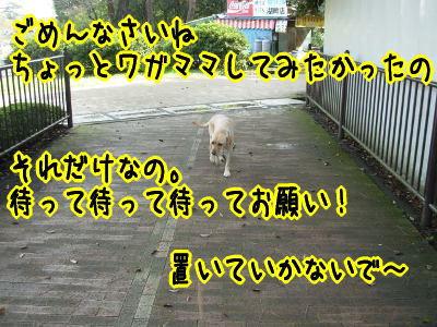 f0043658_0364969.jpg
