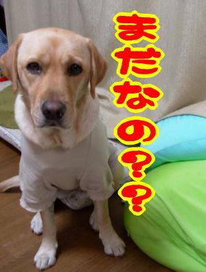 f0043658_0521185.jpg