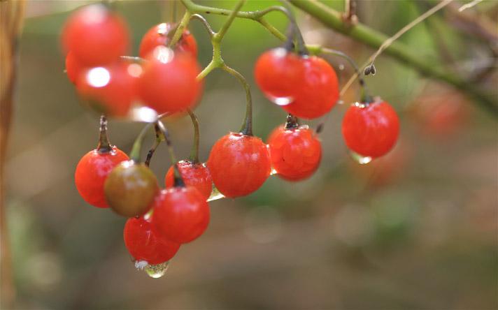 赤い実と白い花_e0071967_2011478.jpg
