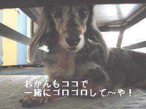 d0020869_1765210.jpg