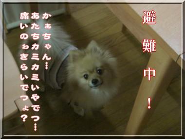 b0078073_14125010.jpg