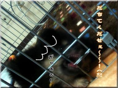 b0078073_1421243.jpg