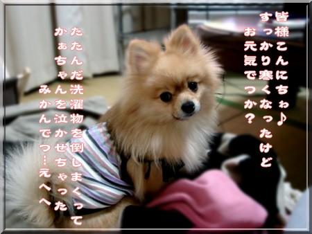 b0078073_1442539.jpg