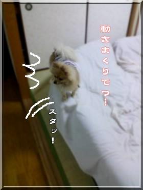 b0078073_147168.jpg