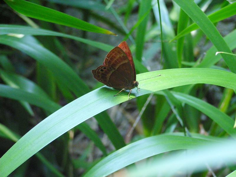 香港の蝶(1)_d0054625_2218324.jpg