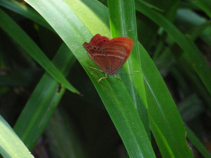 香港の蝶(1)_d0054625_2221527.jpg