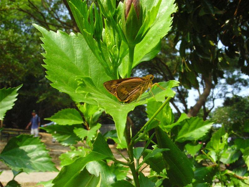 香港の蝶(1)_d0054625_22311147.jpg