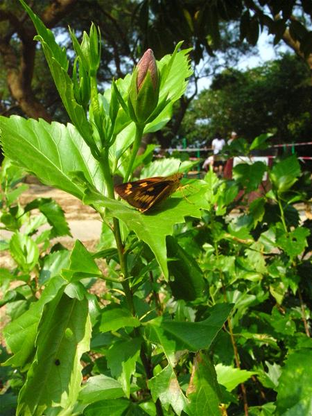 香港の蝶(1)_d0054625_22355255.jpg