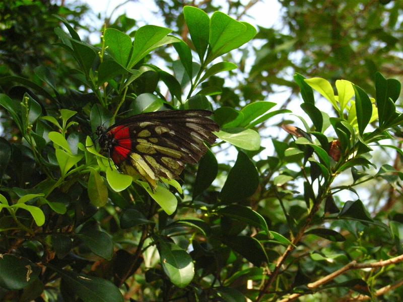 香港の蝶(1)_d0054625_2242724.jpg