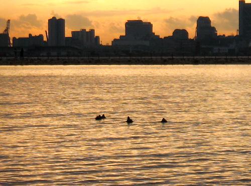 夕日が沈む前のくすんだオレンジの空に、ビルの輪郭がくっきりと浮かび上がって、手前の波間には鴨のような鳥の姿が、家族連れなのか4~5羽連なってゆったり波間に浮かんでいます。海面もオレンジ色に染まって、夕暮れ時の穏やかな風景です。