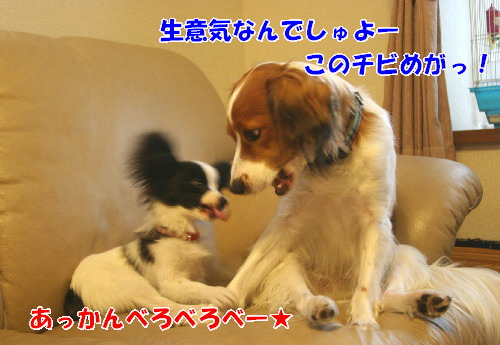 d0013149_033036.jpg
