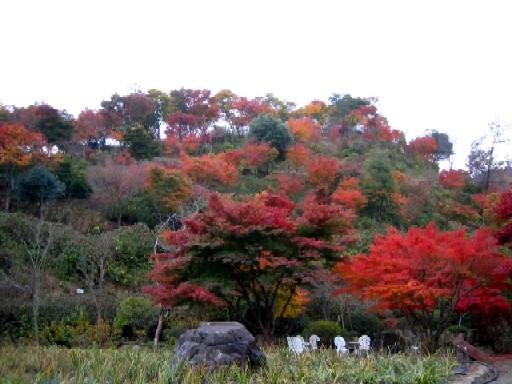 今日の菖蒲園です。_f0085369_2133135.jpg