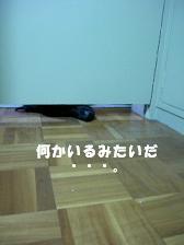 a0042313_1125527.jpg