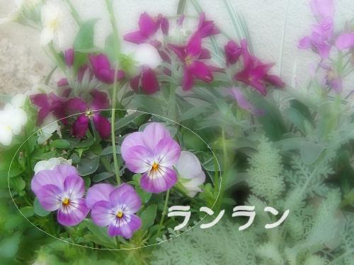 b0009845_1644579.jpg