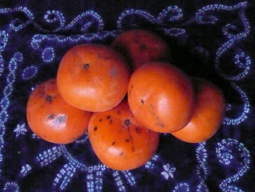 柿とキウイ_e0054299_17402762.jpg