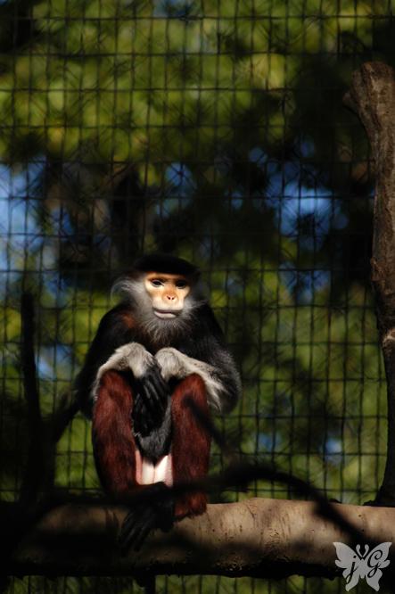 よこはま動物園 ズーラシア_b0053900_23354716.jpg
