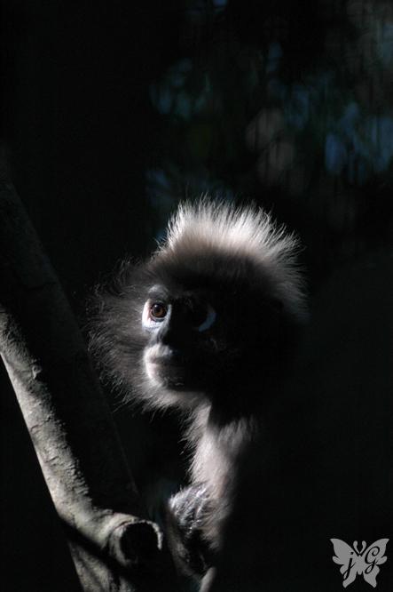 よこはま動物園 ズーラシア_b0053900_23361457.jpg