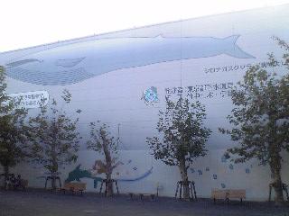シロナガスクジラ。_a0021702_22434110.jpg