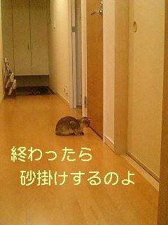 f0113207_21355760.jpg