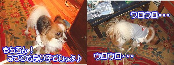 f0011845_1404081.jpg