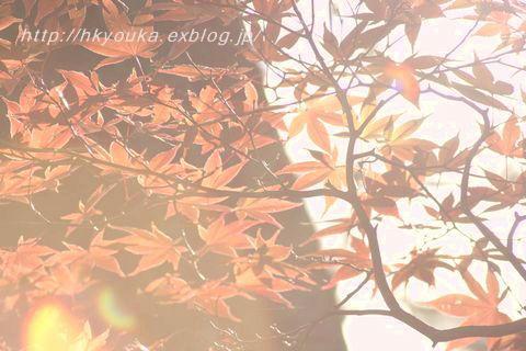 f0107900_2340990.jpg