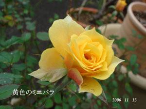 f0057006_15395733.jpg