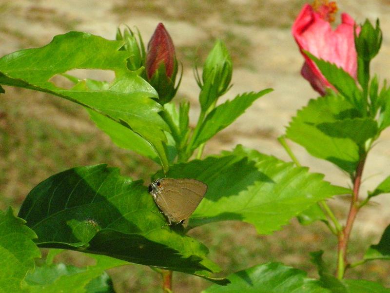 香港の蝶(2)_d0054625_2311068.jpg