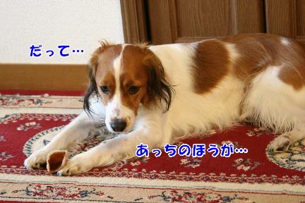 d0013149_0321246.jpg