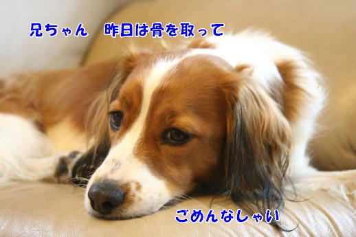 d0013149_23283037.jpg