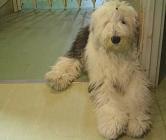 タルヤスの愛犬 メニル!_f0072767_172352.jpg
