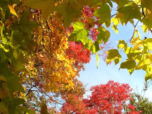 秋色 植物園1_e0048413_2230072.jpg