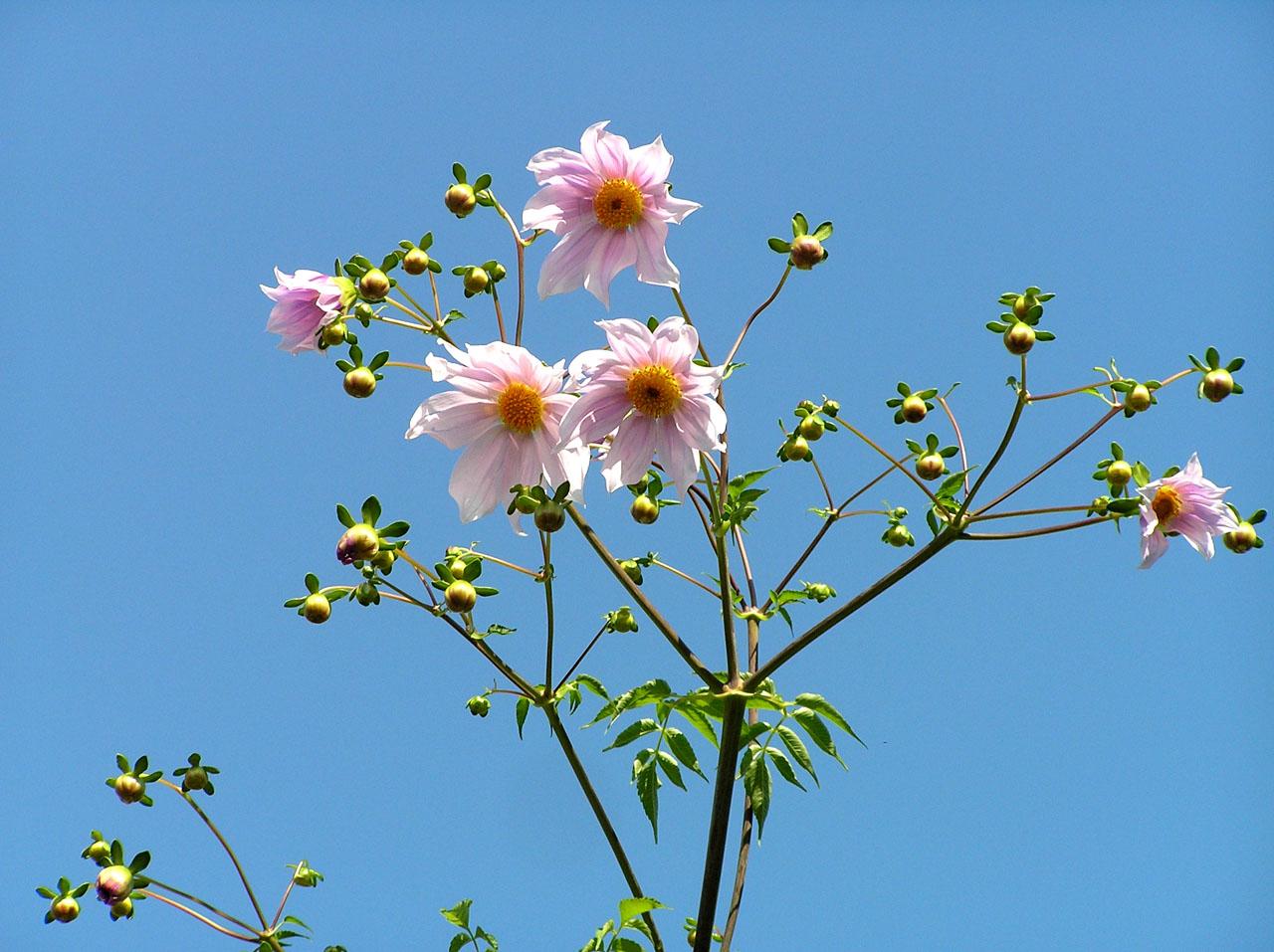 秋色 植物園1_e0048413_22302851.jpg