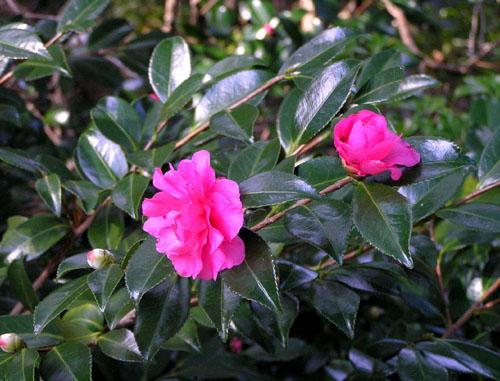 秋色 植物園1_e0048413_22312398.jpg
