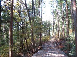 中規模林産現場_e0002820_1618598.jpg
