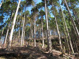 中規模林産現場_e0002820_16231732.jpg