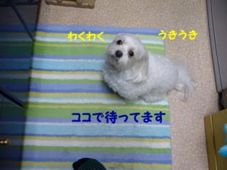 f0005727_16293673.jpg