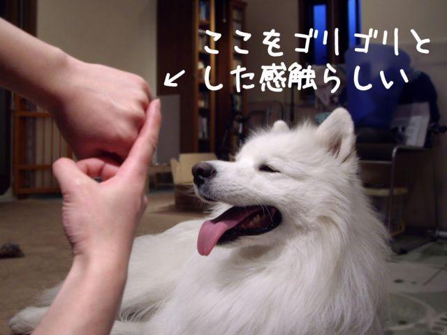 黒岡助手タルタル疑惑_c0062832_19134141.jpg