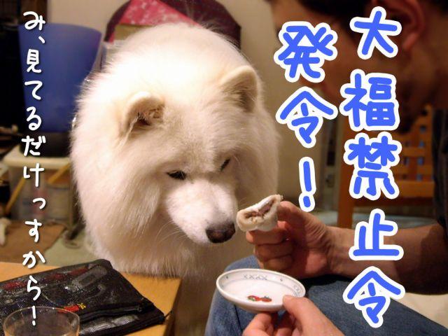 黒岡助手タルタル疑惑_c0062832_19445965.jpg
