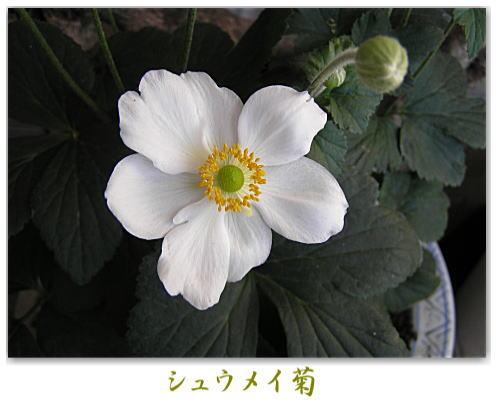 b0101845_1948233.jpg