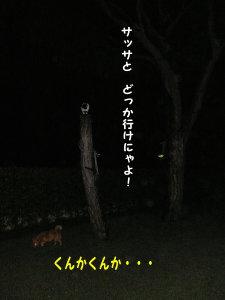 f0005003_082760.jpg