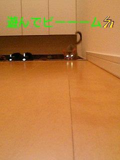 f0113207_2024912.jpg
