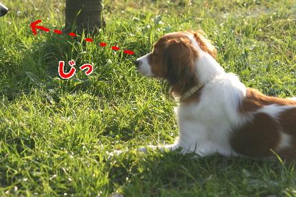 d0013149_1047979.jpg