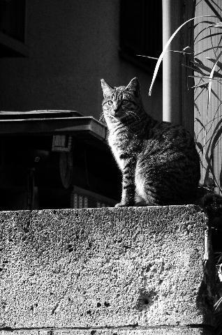 陽光と猫1