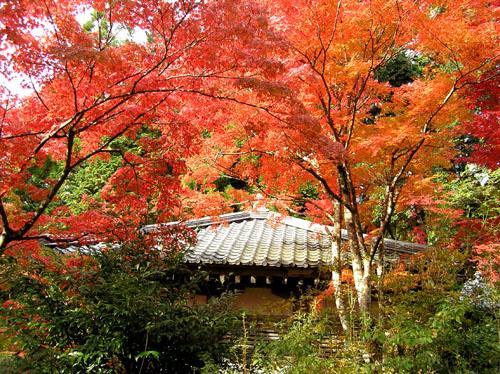 高雄 神護寺1_e0048413_22392030.jpg